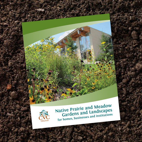 Native Prairie Plants: Native Prairie And Meadow Gardens And Landscapes