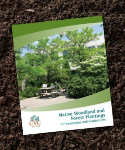 Native Woodland and Forest Plantings