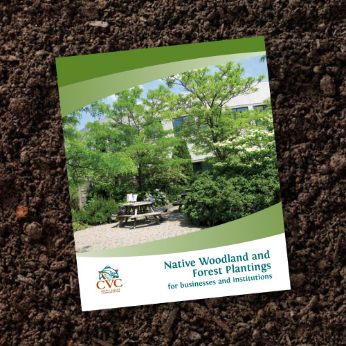 Native Woodland Plants: Native Woodland And Forest Plantings