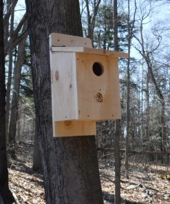 American Kestrel Box