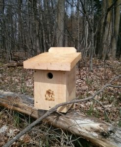 Black Capped Chickadee Box