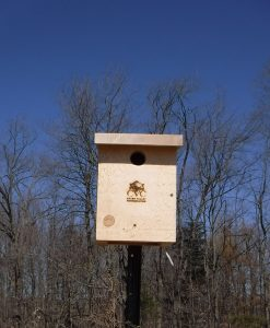 Tree Swallow Box
