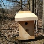 White Breasted Nuthatch Box
