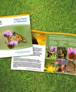 Native Plants for Pollinators Booklet Cover